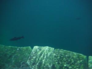 Hubiku Cenote - Underground river fish